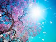 Ağaç ve Güneş Yapbozu Oyna
