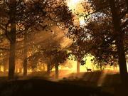 Ağaçların Arasındaki Geyik Yapbozu Oyna