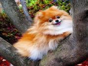 Ağaçtaki Sevimli Köpek Yapbozu Oyna