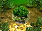 Bardaktaki Ağaç Yapbozu Oyna