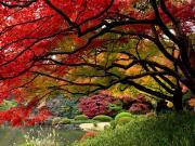 Bir Ağaçta Üç Renk Yapbozu