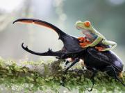 Böcek ve Kurbağa Yapbozu