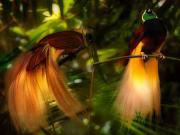 Cennet Kuşu Yapbozu