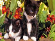Çiçek Bahçesindeki Kediler Yapbozu Oyna