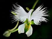Çiçek mi Kuş mu Yapbozu Oyna