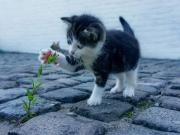 Çiçek Seven Yavru Kedi Yapbozu Oyna