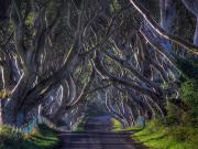 Dark Hedges-İrlanda Yapbozu