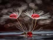 Enteresan Bir Çiçek Yapbozu