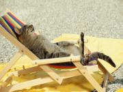 Güneşlenen Kedi Yapbozu
