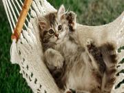 Hamaktaki Kedi Yapbozu Oyna