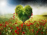 Kalp Ağacı Yapbozu Oyna