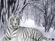 Karların Arasındaki Beyaz Kaplan Yapbozu Oyna