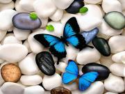 Kelebek ve Çakıltaşı Yapbozu Oyna