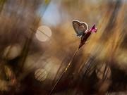 Kelebek ve Çiçek Yapbozu Oyna