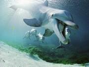 Köpek Balığı Yapboz