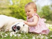 Köpek Seven Kız Yapbozu Oyna