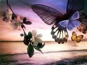 Manzaralı Kelebek Yapbozu Oyna