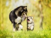Mutlu Köpekler Yapbozu Oyna