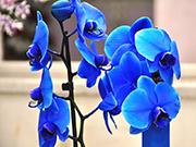 Orkide Çiçeği Yapbozu Oyna