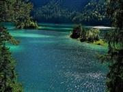Orman ve Göl Yapbozu Oyna