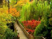 Ormanda Saklı Tahta Köprü Yapbozu Oyna