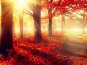 Ormandaki Işıltı Yapbozu Oyna