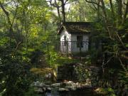 Ormandaki Kulübe Yapbozu Oyna