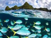 Palau'da Dalış Keyfi Yapbozu Oyna