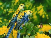 Papağan ve Kelebek Yapbozu
