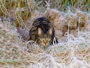 Pusudaki Kedi Yapbozu Oyna