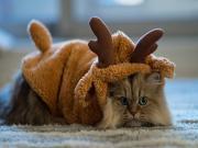 Ren Geyiği Kostümlü Kedi Yapbozu Oyna