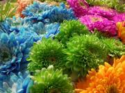 Rengarenk Çiçekler Yapbozu Oyna