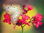 Renkli Çiçekler Ve Kelebek Yapbozu