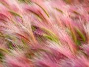 Rüzgar ve Pembe Püsküller Yapbozu
