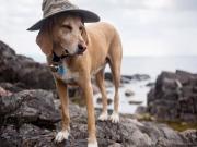 Sahildeki Şapkalı Köpek Yapbozu Oyna