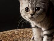 Meraklı Kedi Yapbozu