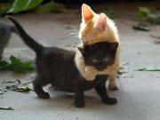 Sevgiyle Sarılan Kedi Yapbozu