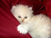 Şirin Kedi Yapbozu Oyna