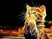 Sevimli Kedi Yapbozu 2 Oyna