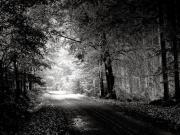 Siyah Beyaz Orman Yapbozu Oyna