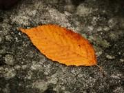 Sonbahar ve Yaprak Dökümü Oyna