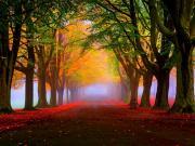 Sonbaharda Orman Yapbozu