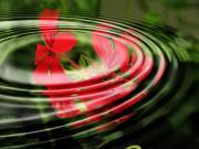 Su Dalgası'ndaki Sardunya Yapbozu Oyna