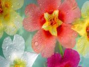 Su Damlacıkları ve Çiçekler Yapbozu Oyna