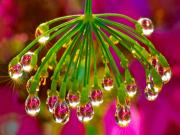 Su Damlasında Gizlenmiş Çiçekler Yapbozu