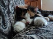 Uyuyan Yavru Kedi Yapbozu