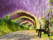 Wisteria Tüneli-Japonya Yapbozu Oyna