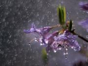 Yağmurla Ağlayan Çiçekler Yapbozu Oyna