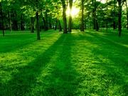 Yemyeşil Park Yapbozu