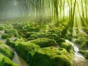 Yosunlu Orman Yapbozu